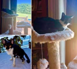 Before and after photos of Bidda, a kitten who was very ill and stray; she found us in the park - we took her home and cared for her,d loved her and now she looks well and fabulous.