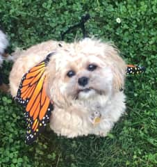 Bella as Butterfly for Halloween