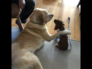 Leo with his best buddy Harvey