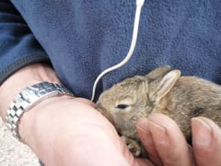 Greg found a stray baby rabbit who was slightly off the beaten track - he was soon happily back in the field.