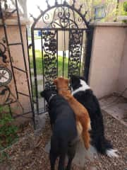 """The girls watching """"the other side of the gate"""" show."""