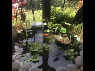 Outdoors from late Spring to late fall, then Indoor aquarium and Siggy the Betta upstairs.