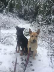 Buddy and Skye in surprise snow!