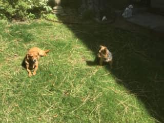 Willie & Peanut