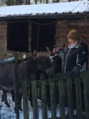 petsitting for 4 donkeys in Oliviers farm dec 2017 Belgium