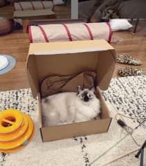 Sylvia in a box