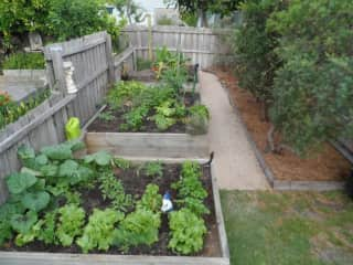 Three of our vegetable garden beds