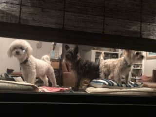We went out to dinner without them and they were waiting and watching for us