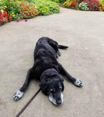 A dog I sit for in Washington