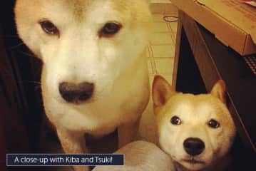 Our friend's Kiba and Tsuki