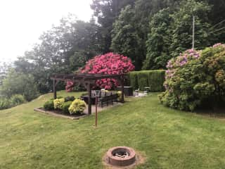 Front sitting area backed by rhododendrons
