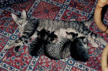 Baghira with her cat babies.