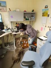 This is me with Shasta, our office dog.  She came to work with her human almost everyday and the first place she would run to was my office.  I'd like to say it's my charm but somehow I doubt I'd have been first if I didn't have good treats!