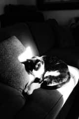 My cat Kobe.