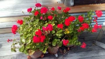 Photos of our garden