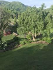 Garden and lower yard