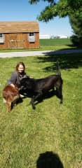 My friend Terri playing with my black lab, Ralphie, and Chester, a friend's dog.