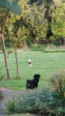 my doggies in the garden