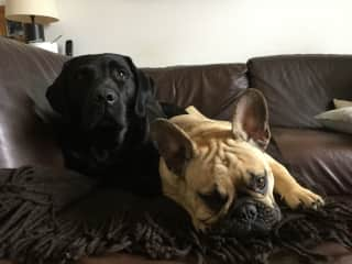 We aren't really allowed on the sofa!!