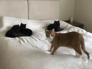 All four cats