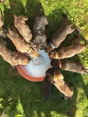 10 Puppies I had to raise