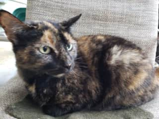 Miss B is a 12-year-old independent woman who likes just about everyone.
