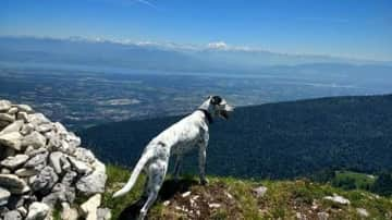 View southwards from French Jura, with Geneva lake and alps in background