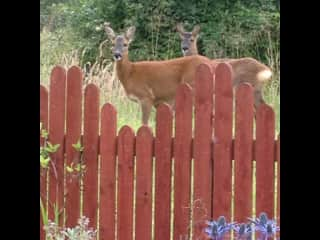 We occasionally get visitors to the garden!