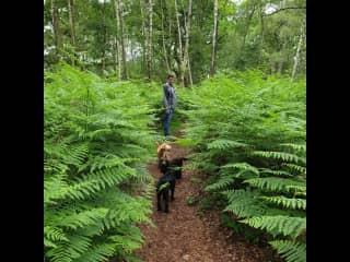A walk in the Fern Woods.