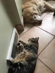 Arrow and Chloe at home soaking up the heat