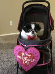 Valentines Day Pet Parade