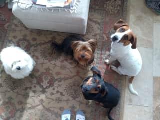 Everyone! Dot, Charlie, Harry and Bo