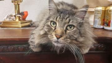 Big Bad Kitty - Marin County, 2015