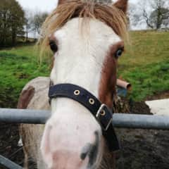 Looking after a lovely Pony