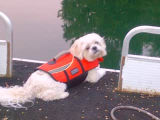 Yogi on our boat (he's a poor swimmer)