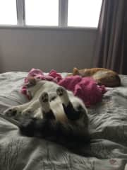Nap time on the bed