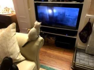 Flora watching TV