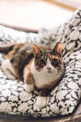 Beautiful photo of Mishu by Lisa (https://www.trustedhousesitters.com/house-and-pet-sitters/united-kingdom/england/london/l/1067621/)