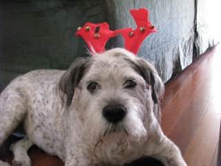 Our beloved Streatie dog