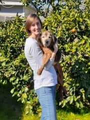 Edna, our senior foster dog