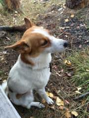 My dad's dog - my running partner