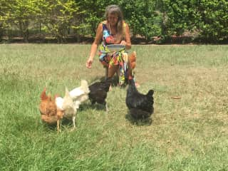 Nevenka sharing sunflower seeds and grapes with the charming chickens.