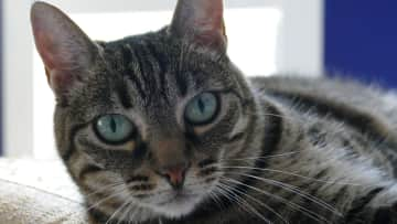 She's a very happy cat, almost always in a good cheery mood. Very social and loves visitors!