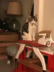 Atticus surveying the room