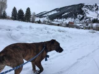 Walking Yodi in the snow.