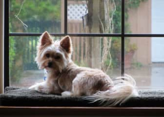 Charlie in a window