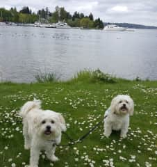 Weekend paw adventure with Ruby and Pearl!