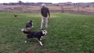 Rolf playing with three dogs