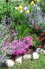 A small portion of my perennial garden