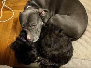 Roxy using Fiona as a pillow